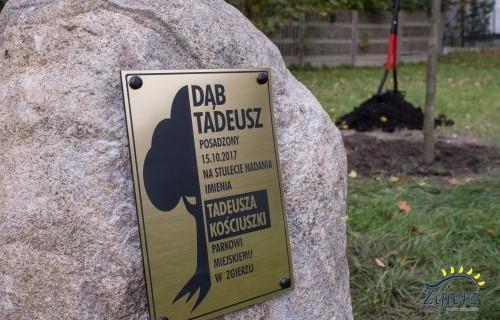 """Kamień z pamiątkową tabliczką """"Dąb Tadeusz"""""""
