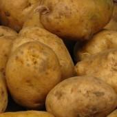 Plakat Kartoflady