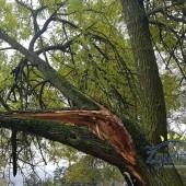 Zdjęcie połamanego drzewa