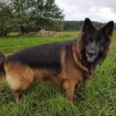 Zdjęcie zaginionego psa