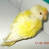 Zdjęcie odłowionej papugi