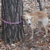 Zdjęcie przywiązanego psa