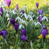 Wiosenne kwiaty - fot. pixabay.com (domena publiczna)