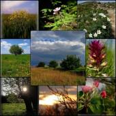 Krajobraz kolaż - fot. pixabay.com (domena publiczna)